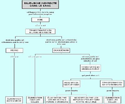 mecanisme de l'ictere