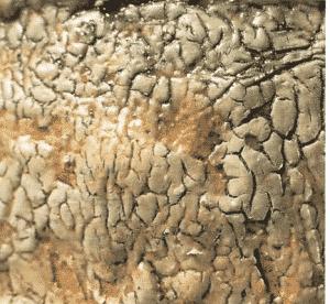 Nani Champy Schott 300x276 - Frittes, émaux et glaçures