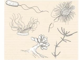 img2 300x229 - Eubactéries
