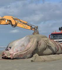 La Grande Baleine