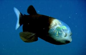 photo-animal-poisson