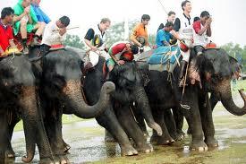 polo - Polo des éléphants