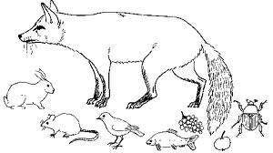 renard - Jeux : La chasse au renard