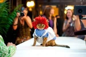 Anniversaire de Mathilde 2 300x201 - Un véritable fashion-show pour Les chats