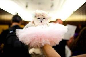 Anniversaire de Mathilde 3 300x199 - Un véritable fashion-show pour Les chats