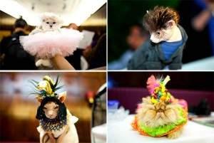Anniversaire de Mathilde 300x201 - Un véritable fashion-show pour Les chats