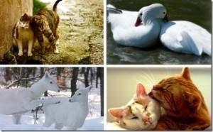 L'amour chez les animaux