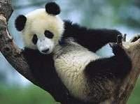 Pandas - Pandas