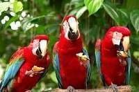 Perroquets - Perroquets