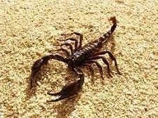 Scorpions - Scorpions