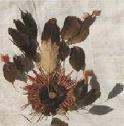 Textiles avec plumes - Textiles avec plumes