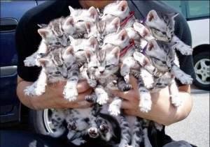 Bouquet de chaton