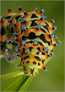 Insecte multicolore