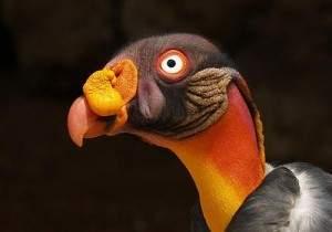 Connaissez vous ce drôle d'oiseau?