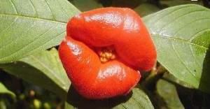 fleurs en levres1 300x156 - Fleurs en lèvres