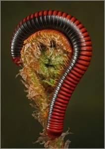 Les insectes les plus incroyables