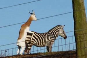sex1 300x201 - La sexualité chez les animaux