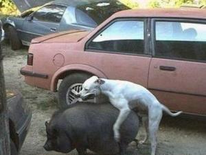La sexualité chez les animaux