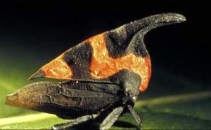 Photos d'insectes étranges