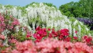 Des merveilleuses chutes fleurs