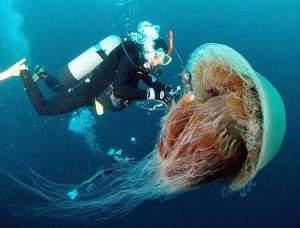 La géante médeuse