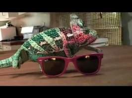 Un caméléon changer de couleur