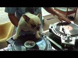 Un chien DJ