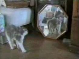 vidéo gag de chats