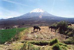 Misti - Les volcans en Amériques: Pérou