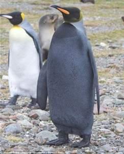 Le Penguin Noir