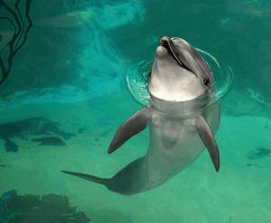 Photographies sublimes d'animaux
