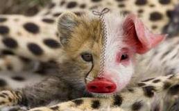 animal hybride - Superbe animal hybride!!!