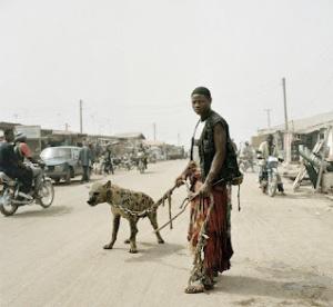 animaux 300x276 - Les animaux doméstiques au Nigeria!