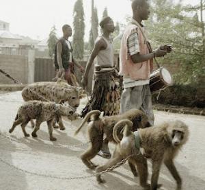 animaux1 300x277 - Les animaux doméstiques au Nigeria!