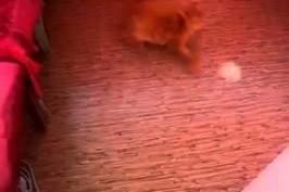 Un chat s'amuse de faire des claquettes