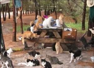 Maisons pour les chats sans foyer