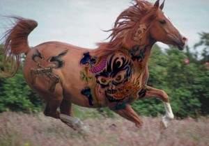 Des chevaux tatoués