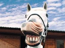 Un cheval rigolo