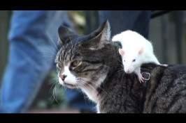 Chien, chat et rat….