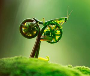 Insecte drôle