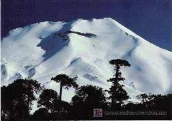 lonquimay - Les volcans en Amériques: Chili
