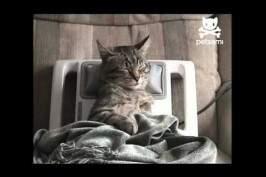 Massage pour un chat stressé