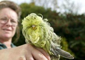 Oiseau insolite