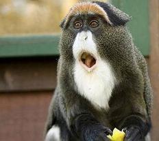 Un singe etonnant