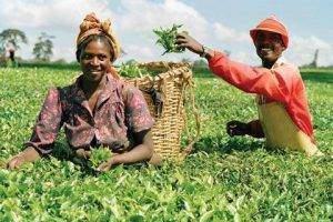 Les raisons économiques de lenjeu africain 300x200 - Les relations internationales depuis 1945: L'Afrique