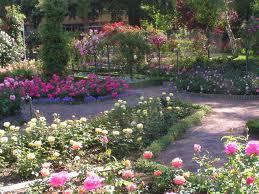 347 - La roseraie:un pôle d'activités,l'écoute des habitants