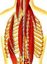 185 - Atteintes vestibulaires de l'oreille interne:Vertiges d'origine cervicale