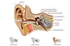 275 - Atteintes vestibulaires de l'oreille interne:Vertige