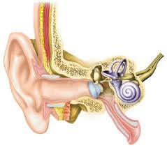 346 - Atteintes auditives de l'oreille interne:Maladie de Ménière
