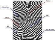 Ce que disent les empreintes digitales quand les empreintes se forment elles1 - Ce que disent les empreintes digitales: Quand les empreintes se forment-elles?